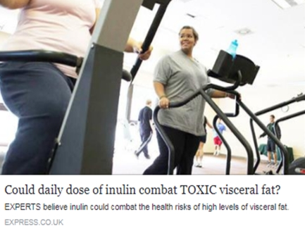 Could a daily dose of inulin combat Toxic visceral fat?